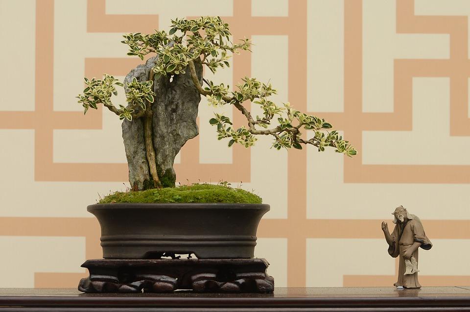 bonsai - květina jako dárek do nového domu
